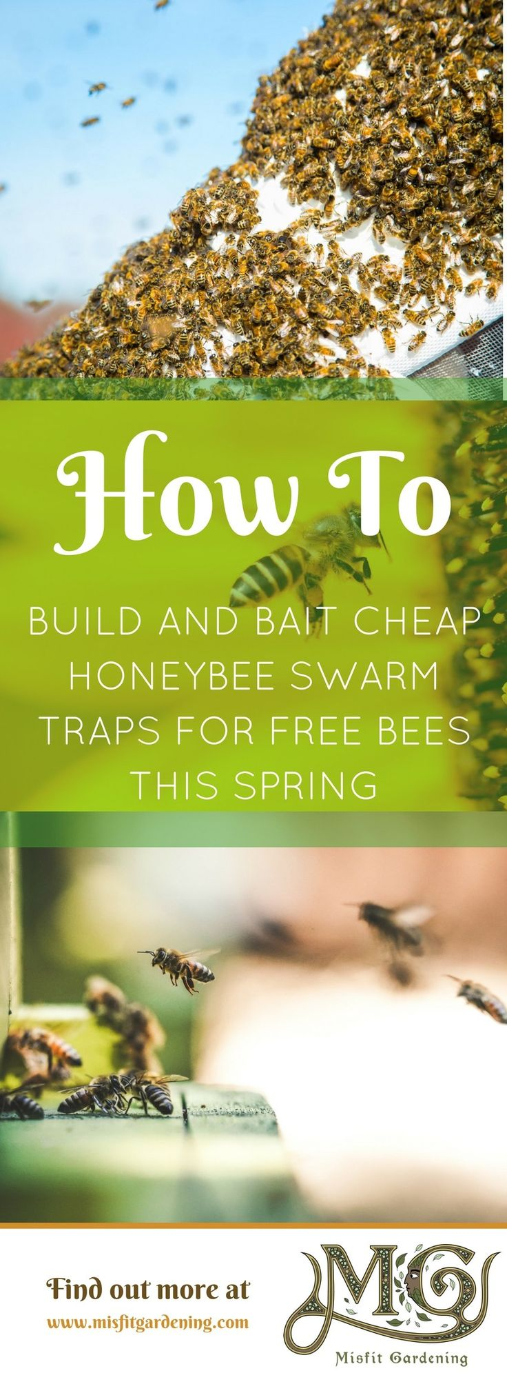 How to cheaply build bee swarm traps. Click to find out how to build and bait a trap for a free honeybee swarm or pin it for later