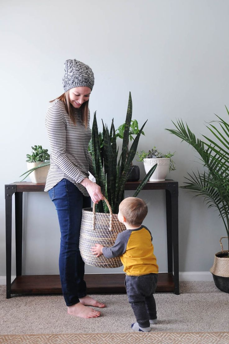 Houseplants add texture and color and go with any style of home decor. Use these tips to learn the basic of how to keep houseplants alive!