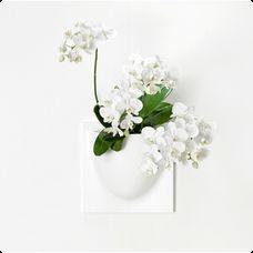 VertiPlants - Veggkrukke - Hvit - NOK 347 VertiPlants - Veggkrukke - Hvit VertiPlants - Veggkrukke - Hvit. Elegant veggkrukke fra danske VertiPlants, som kan henge på veggen alene eller så kan flere enkelt settes sammen på en flott måte. Med et utvalg av vakre planter kan du gi veggen sitt helt eget, unike uttrykk. VertiPlants veggkrukken kan også brukes til annet enn planter; bruk den på barnerommet til oppbevaring av småting, på kontoret til kontorartikler eller på kjøkkenet til…