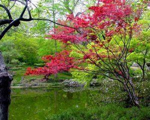 Ideas for a Prayer Garden (meditative garden, contemplative garden)