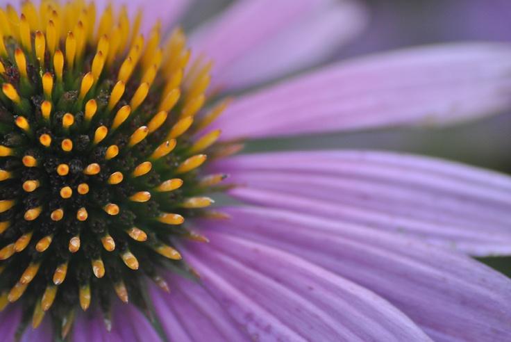 nature photography (macro)