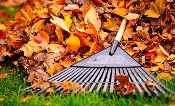 Ecco quello che odio da fare dopo le vacanze, arriva l'autunno e il mio giardino si riempie di foglie.... Tocca a me ripulire tutto!!! #noncelapossofare secondo me è arrivato il momento di chiedere a voi amici di #zzub che ne dite di una campagna su giardinaggio....