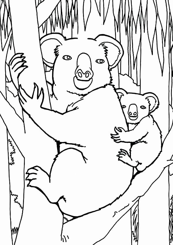 28 Koala Bear Coloring Page in 2020 (With images) | Bear ...