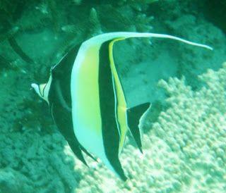 Bellos peces #maldivas