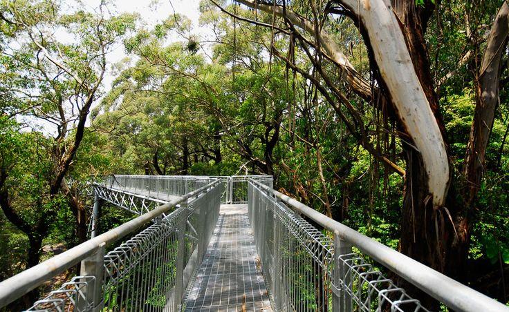 Illawarra Fly Treetop Walk, South Coast