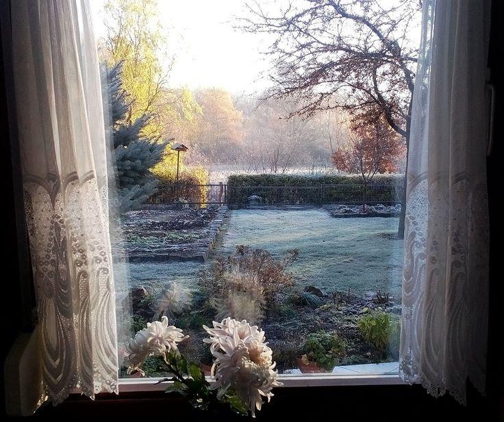 November Frost - Mára a novemberi fagy megérkezett. A kertben a barna levelek az utolsó lélegzetükben sóhajtoznak, ahogy a földre kúsznak. A madáretető körül a tolongás borítékolható. A fagy harapja az orrunkat a meleg sapkák és kesztyűk izgatottan használatra jelentkeznek… (Kerepes, Hungary - Németh György fotó)