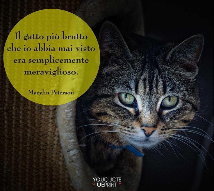 Il 17 febbraio si celebra la Festa nazionale del #gatto. Ecco la nostra raccolta di frasi sui gatti. Il gatto più brutto che io abbia mai visto era semplicemente meravgilioso