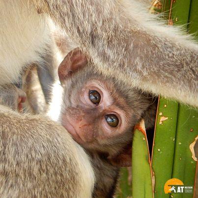 #Safari #Tansania #Affenbaby