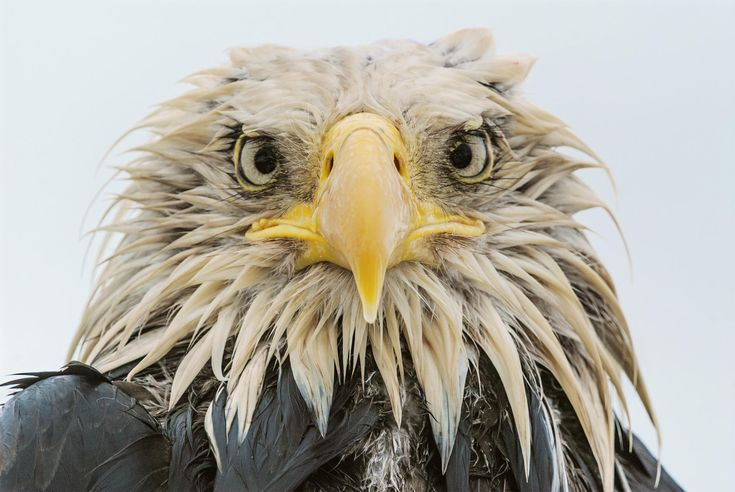 <p>For Bald Eagle Appreciation Day, we've compiled our favorite images of these iconic raptors.</p>