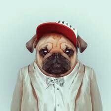 Pug #homie #swag #suit #animal #as #human #design #pug