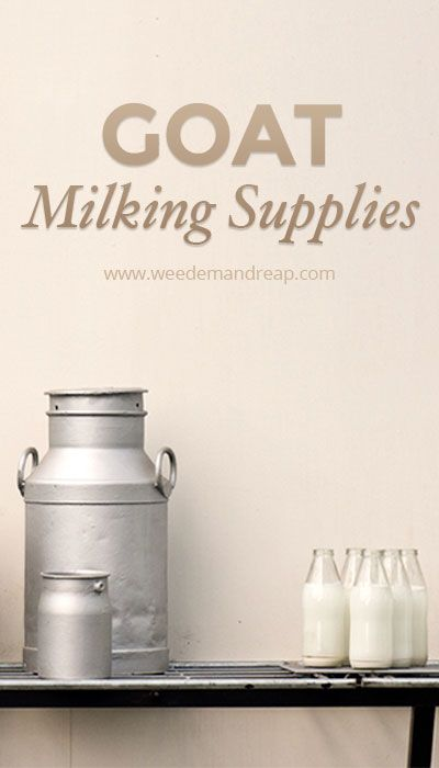 Goat Milking Supplies | Weed 'Em and Reap (a quick-how-to!)