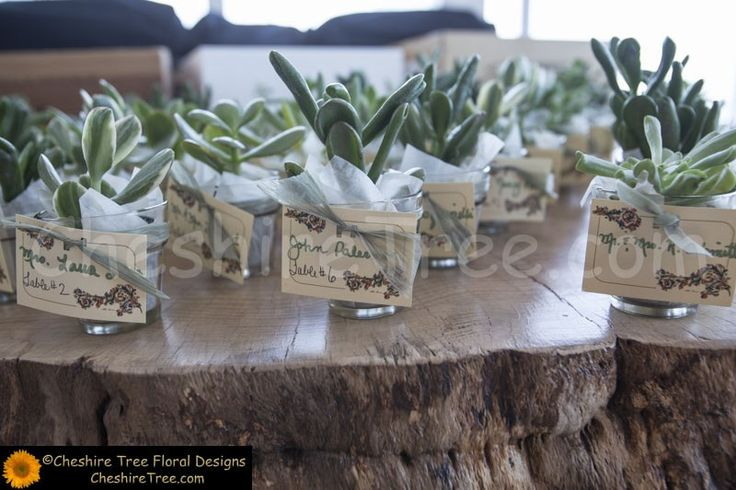 !mariani-09-42-the-restaurant-wedding-flowers-reception-place-card-table-succulents-closeup A closeup of the place cards held by small succulent plants