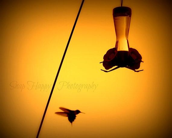 Hummingbird Shadows  8x10 Photo  Hummingbird & by Snaphappy72, $15.00