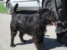 Dolly Hund Mischlingshund In Ungarn Tierheim Tiere Hunde