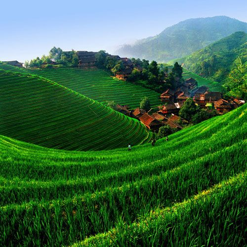 Longji rice terrace, China.