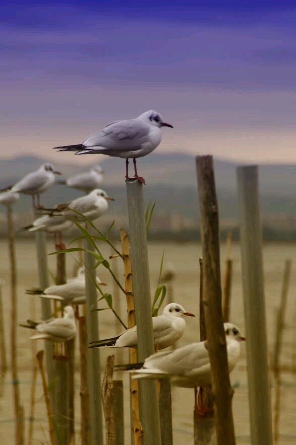 Birds                                                       …                                                                                                                                                                                 Plus