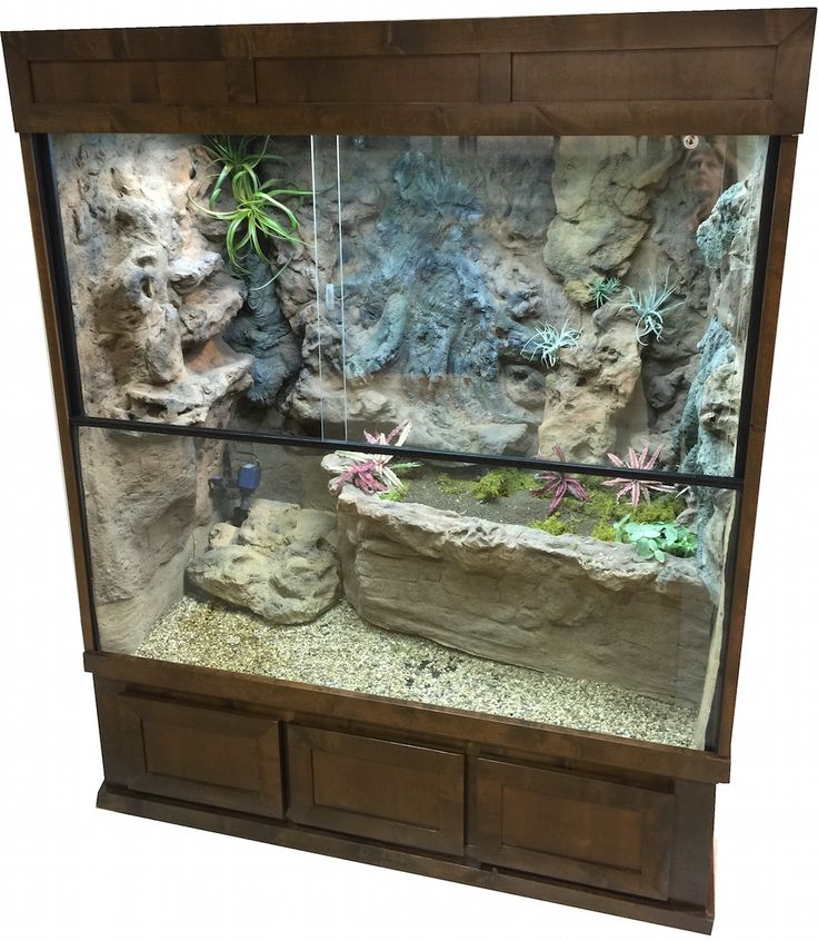 Custom Designed Terrarium For A Mangrove Monitor Http