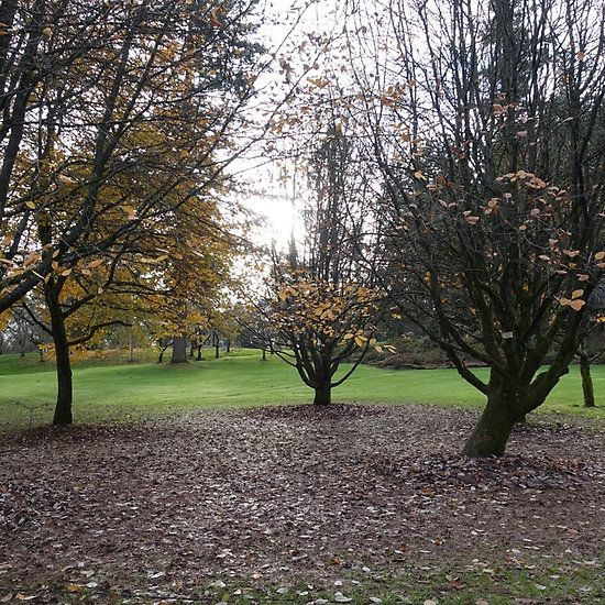 winter botanical garden trees.