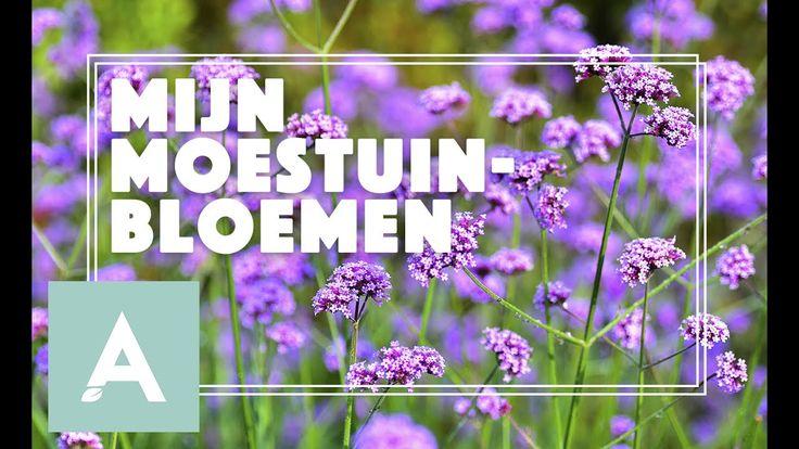 Bloemen voor de bijen, hommels en vlinders! - Grow, Cook, Eat #45