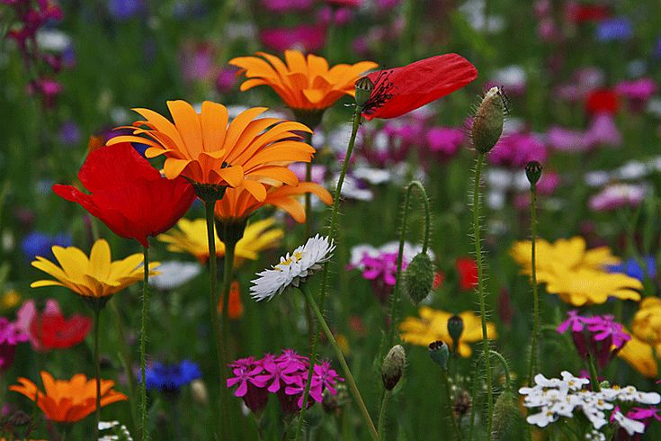Sommerblumen säen, Zeitpunkt