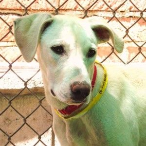 Sage is a family girl who loves her mom Clover and sister Basil. Like the others she is a bit on the shy side, but responds to affection. This puppy needs basic training and will be a fantastic family dog!