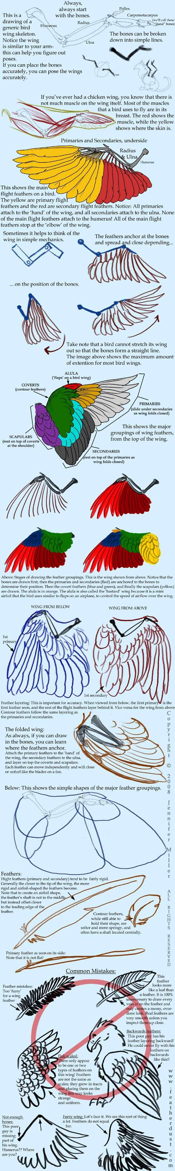 Please read before using this tutorial: 1. This is a very basic wing drawing tutorial and is aimed at beginners and those unfamiliar with wing anatomy. It is NOT supposed to rival a scientific pape...