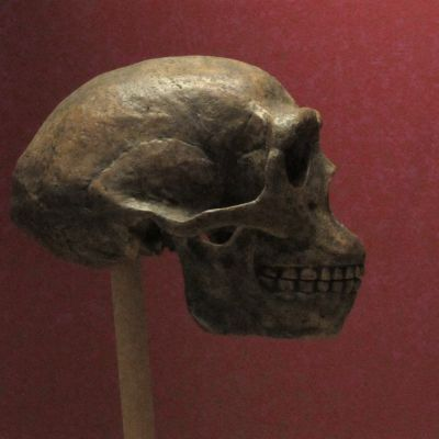 Peking Man: The bones that were discovered 90 years ago and went missing during WWII