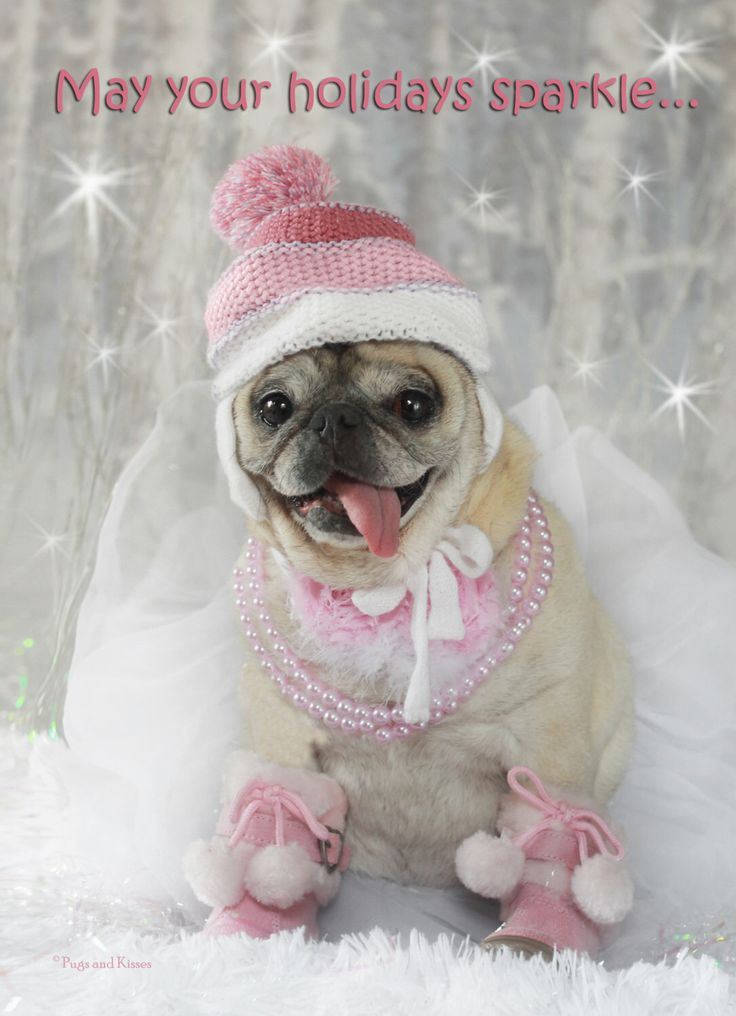 BOX of 10 CARDS 5x7 Sparkle Pug Holiday Card by Pugs and Kisses by LovePugsAndKisses on Etsy https://www.etsy.com/listing/211155114/box-of-10-cards-5x7-sparkle-pug-holiday