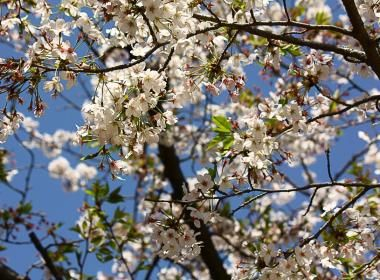 Printemps au Japon : activités & lieux incontournables