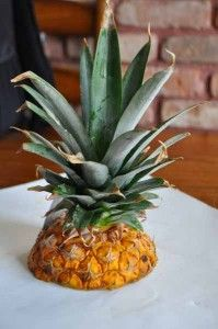 Planting a Pineapple Top, a Photo Journey   Cheryl's Delights