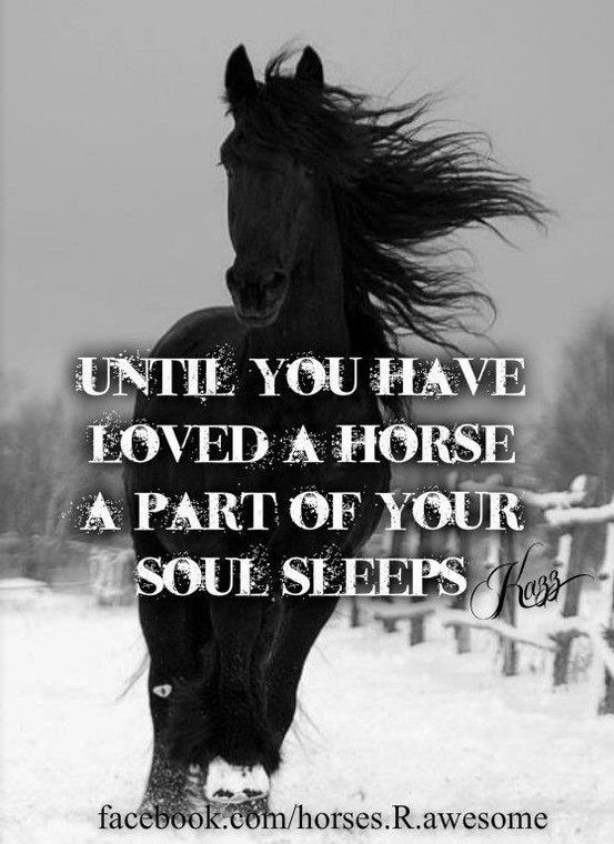 322 best images about Inspiring Horse Quotes on Pinterest ...