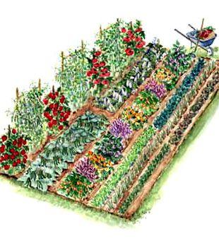 92 best images about fruit veg garden on pinterest for Ornamental vegetable garden design