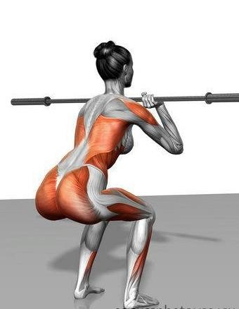 ATTENTION Ladies and Gents...do your squats! Look at all the muscles you are working in one exercise. You're better off doing solely squats in the gym then riding all the machines and equipment like you're at an amusement park.