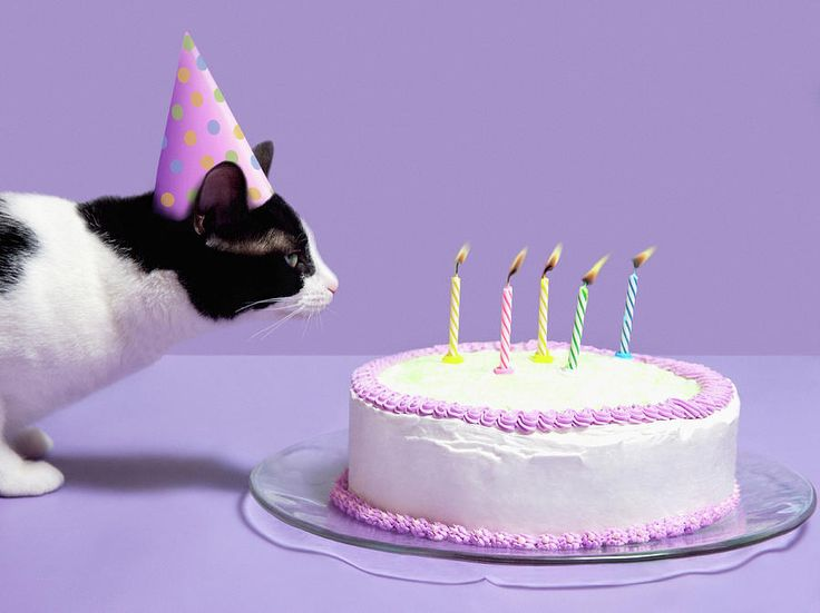 cat birthday cake