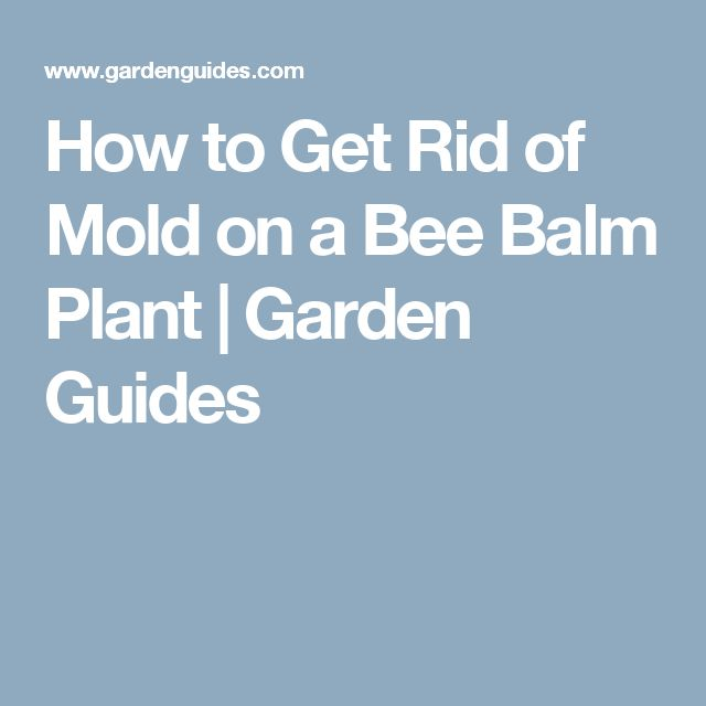 How to Get Rid of Mold on a Bee Balm Plant | Garden Guides