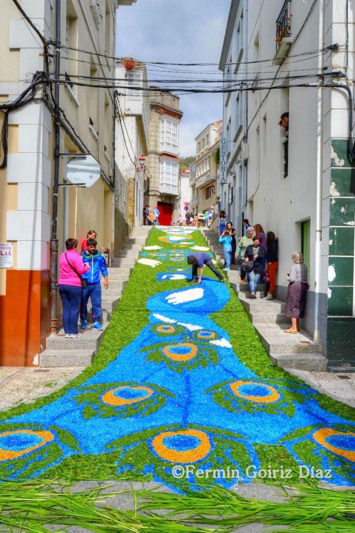 Alfombras florales – Corpus en Cedeira   Ferrol, Cedeira, Pantín y lo que cuadre