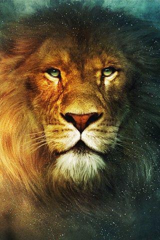 ~J   Don't make the KING....mad  !!!!!!    Aslan
