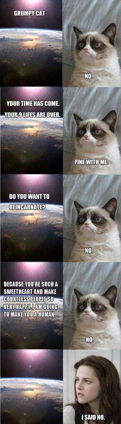 Grumpy cat!!! Lol!!: Cats, Grumpycat, Funny Pictures, Kristen Stewart, Funny Stuff, Funnies, Grumpy Cat