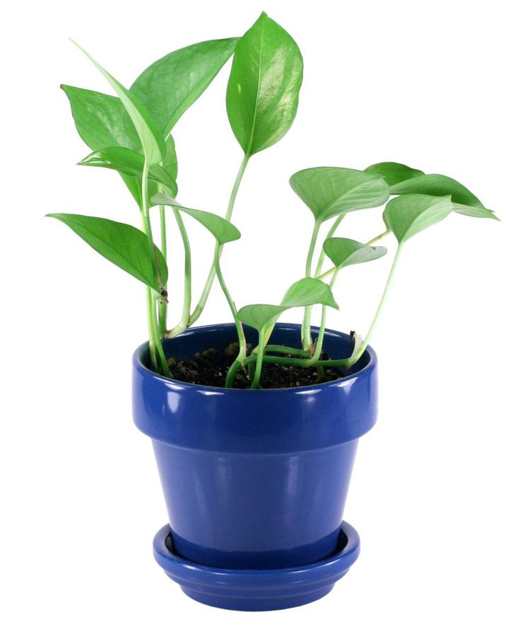 Small Plants for Office Desk Online - Design Desk Ideas Check more at http://www.sewcraftyjenn.com/small-plants-for-office-desk-online/