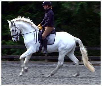HorseID: 1860187 Xairel Interagro - PhotoID: 671090 -  2013-09-19 Days Left: 137