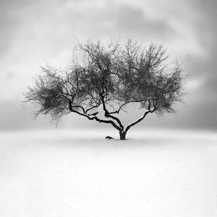 Whiteout by Sherry Akrami on 500px