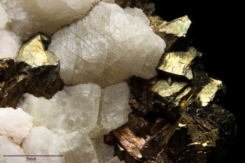 Pyrite and Calcite // Otamo dolomite quarry, Siikainen, Western and Inner Finland Region, Finland
