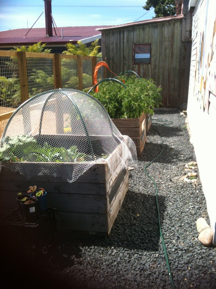 Peach Bin garden with critter cover netting. I have a bin garden and this would be perfect to keep the squirrels and deer out.