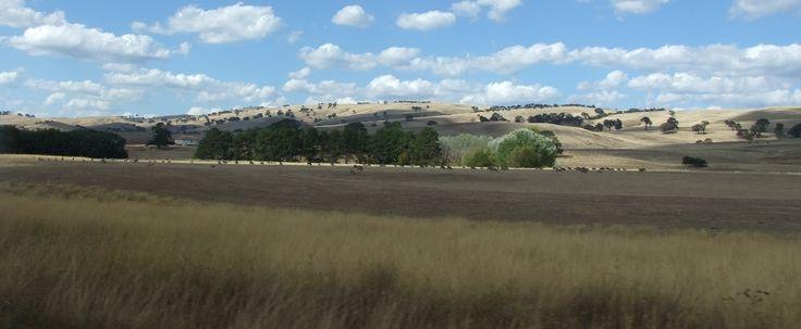 The plains of Merrijig