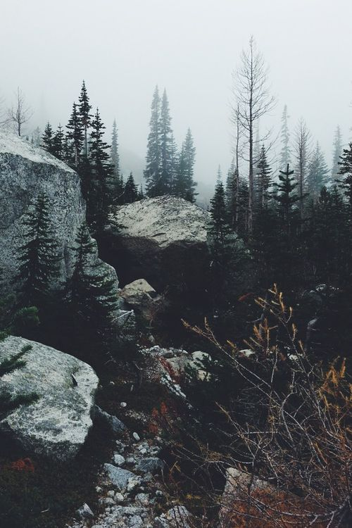 vhord:  chernobyl-tea-party:  vhord:  moody-nature:  The morning...