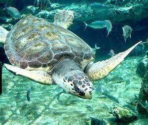 Georgia Sea Turtle Center, Jekyll Island, Georgia