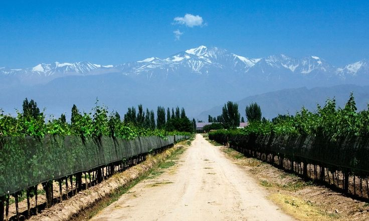 Argentina's Mendoza wine route: top 10 guide