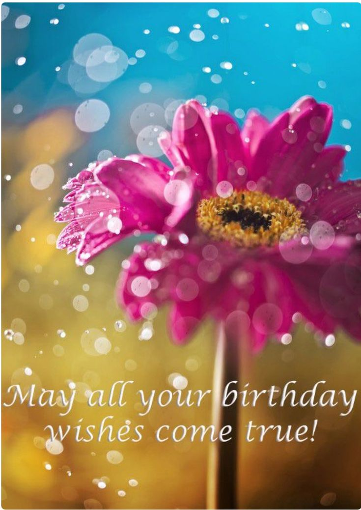 86 best Birthday Wishes images – Free Birthday Messages for Cards
