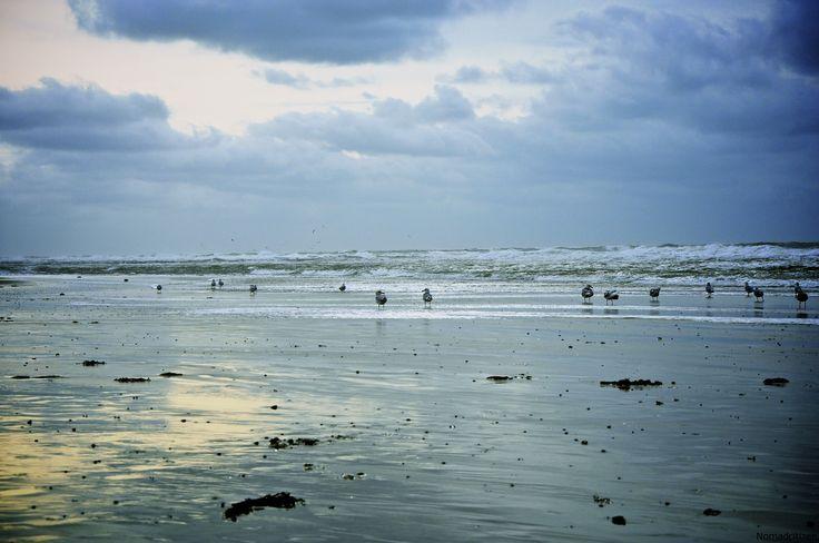 Texel – An Island in the North Sea part of the Unesco World heritage Toute mon enfance les etes sur l'île de Texel