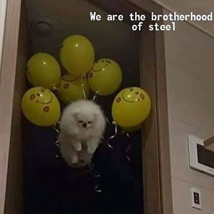 The Brotherhood of Steel is about as menacing as a puppy.